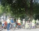 Soundwavey Bikes under the trees